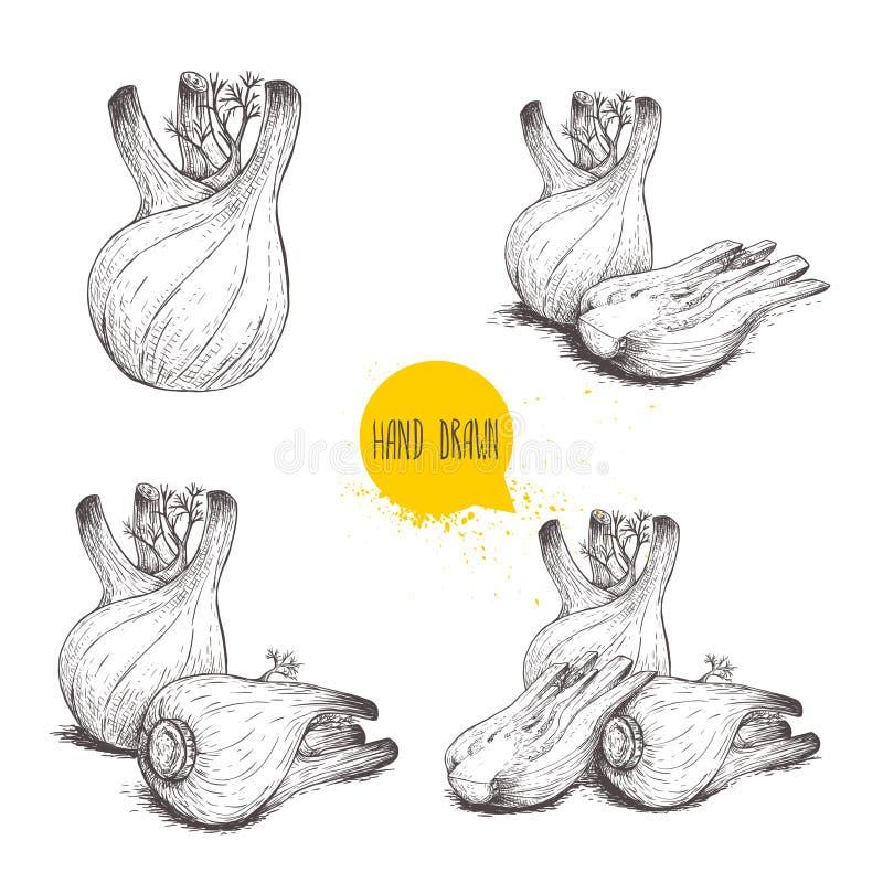 Ensemble tiré par la main d'ampoules de fenouil de style de croquis Entier et coupe, simple et groupe Herbes, ?pices et condiment illustration stock