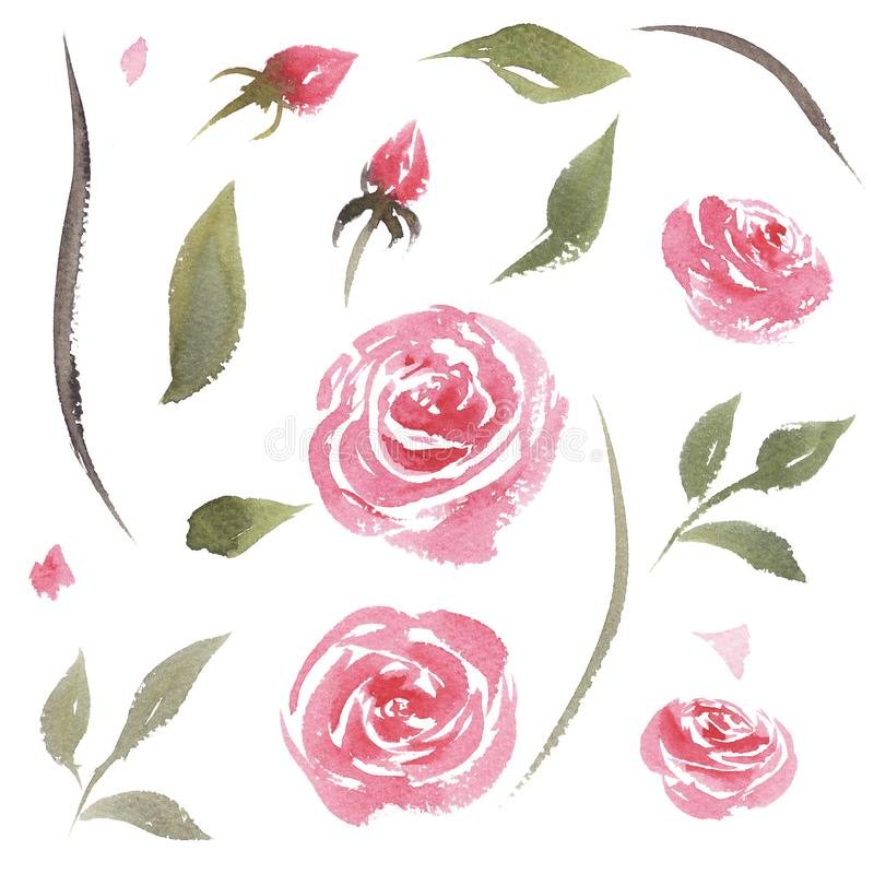 Ensemble tiré par la main d'aquarelle de roses de rose de cru illustration de vecteur