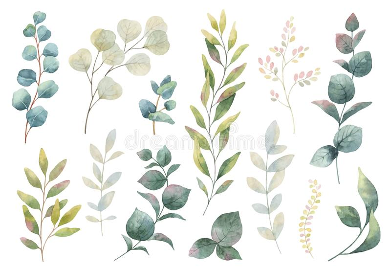 Ensemble tiré par la main d'aquarelle de vecteur d'herbes, wildflowers illustration libre de droits