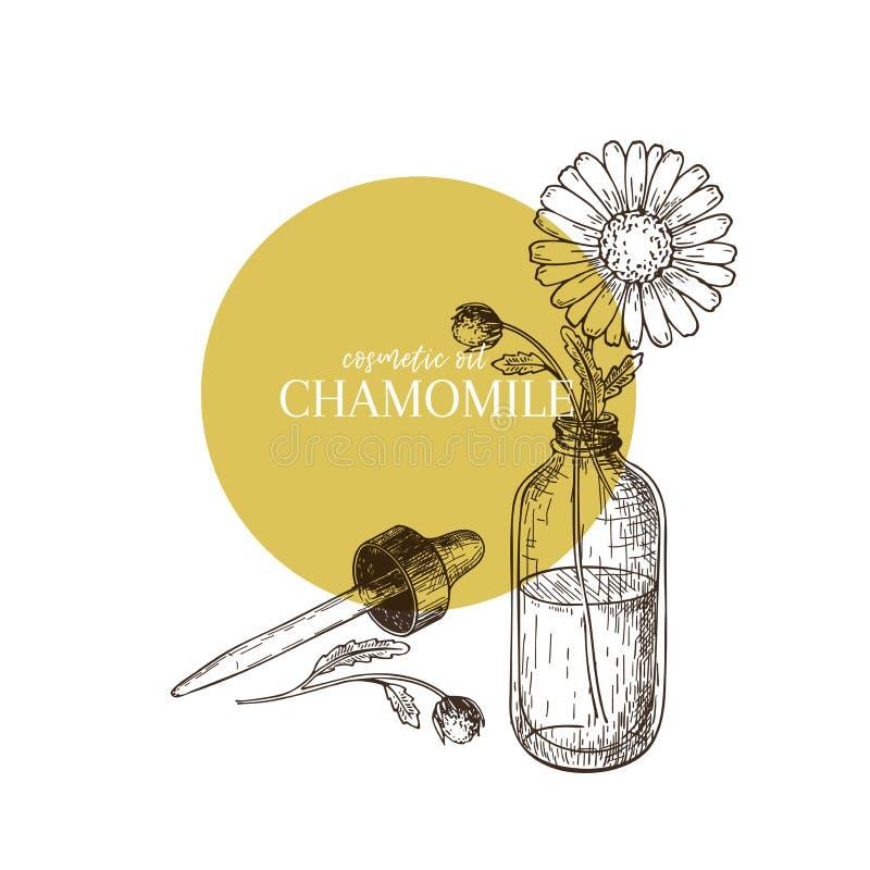 Ensemble tiré par la main d'huile essentielle Fleur de marguerite de camomille de vecteur Herbe médicinale avec la bouteille en v illustration stock