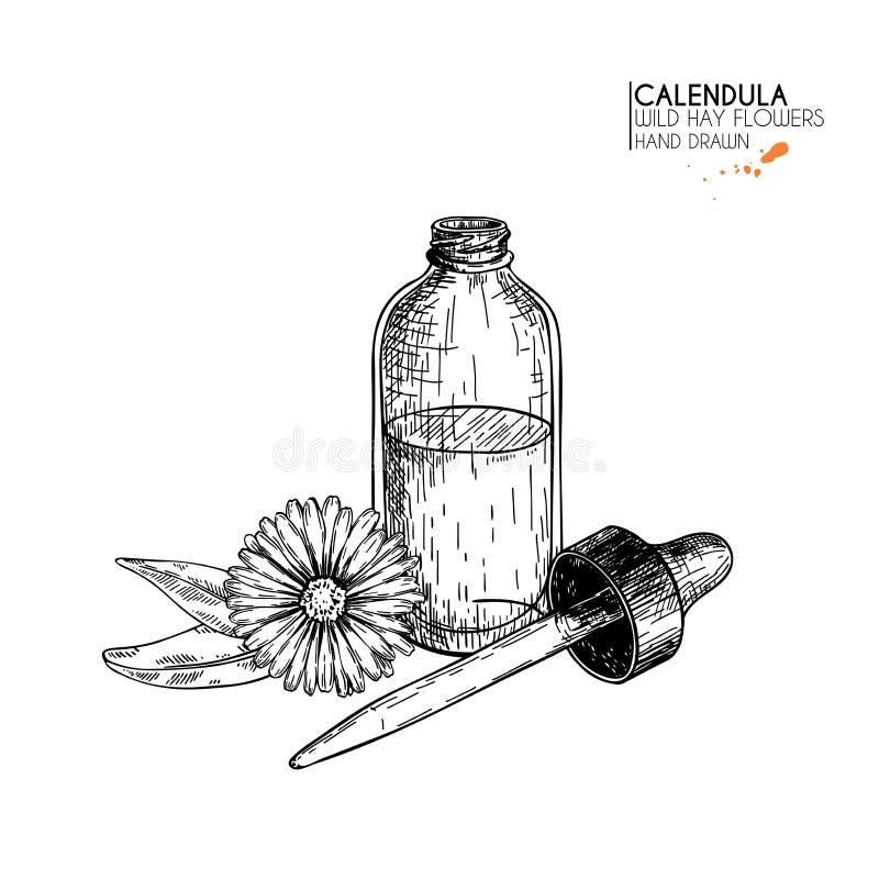 Ensemble tiré par la main d'huiles essentielles Fleur de calendula de vecteur Herbe médicinale avec la bouteille en verre de comp illustration libre de droits