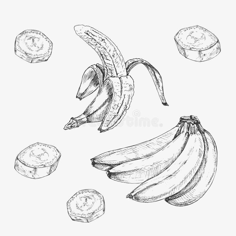Ensemble tiré par la main de banane Rétros croquis d'isolement Illustration de vecteur illustration stock