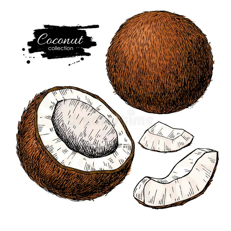 Ensemble tiré par la main de noix de coco de vecteur Illustrati tropical de fruit d'été illustration stock