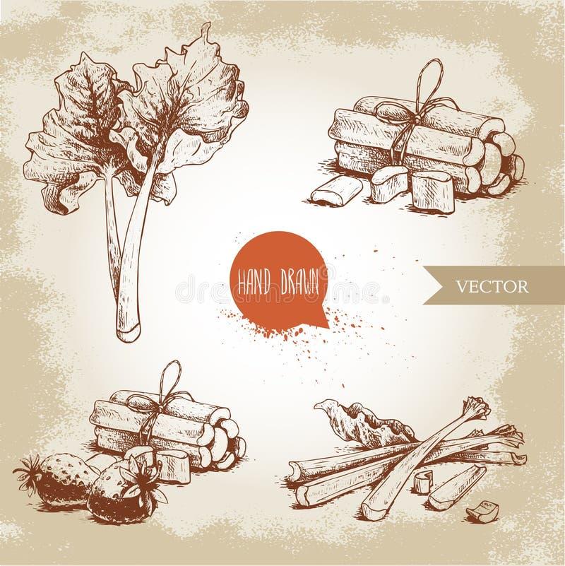 Ensemble tiré par la main de rhubarbe de style de croquis feuilles, groupes coupés et entiers avec la composition en fraises illustration stock