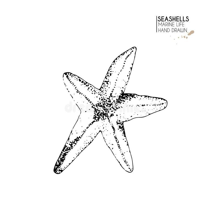 Ensemble tiré par la main de vecteur de coquillages Étoiles de mer d'isolement Faune sous-marine Coquille tropicale sur le blanc  illustration libre de droits