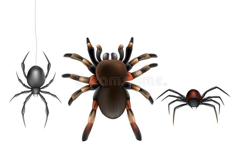Ensemble toxique de vecteur de bande dessinée d'espèces d'araignées illustration stock