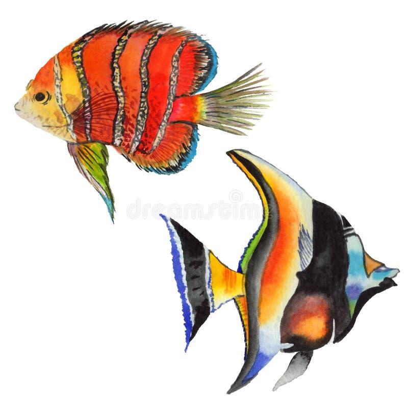 Ensemble tropical coloré sous-marin aquatique de poissons d'aquarelle La Mer Rouge et poissons exotiques à l'intérieur illustration de vecteur