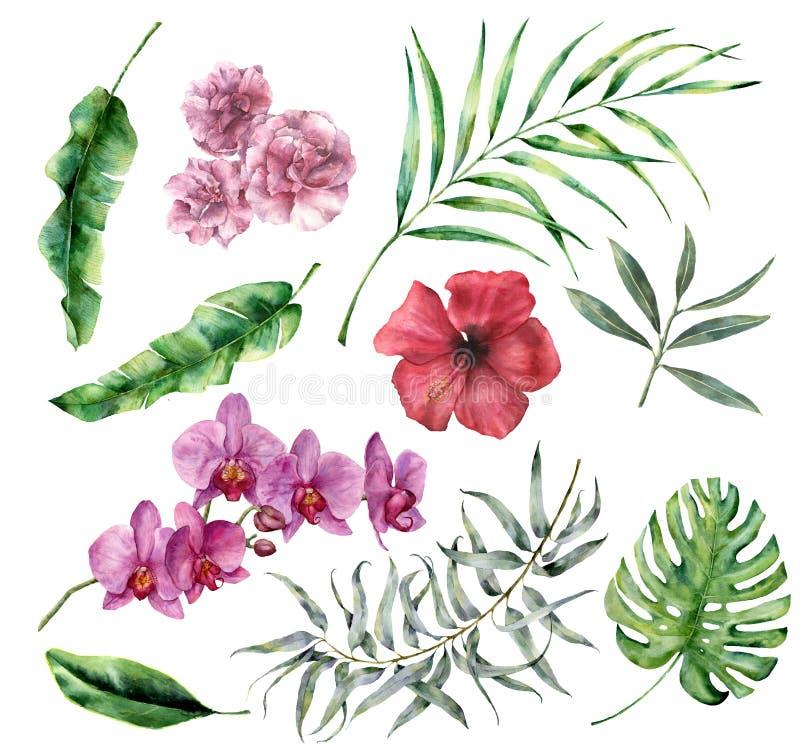 Ensemble tropical d'aquarelle avec des fleurs et des feuilles Paume peinte à la main, monstera, ketmie, orchidée, oléandre, eucal illustration libre de droits