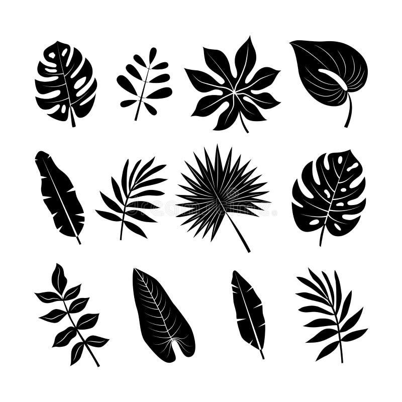 Ensemble tropical de silhouettes de feuilles Collection de palmettes de jungle image libre de droits