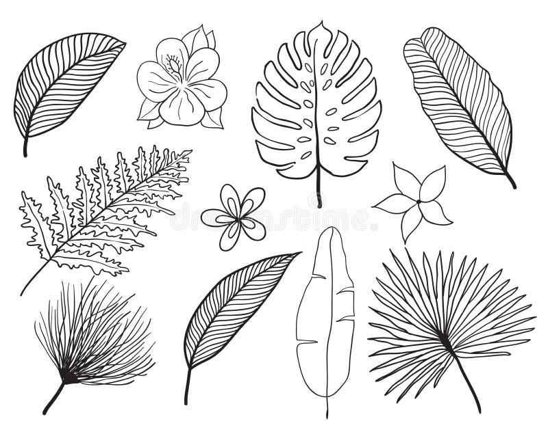 Ensemble tropical tiré par la main de silhouette de feuilles Placez la feuille exotics Illustration botanique de vintage illustration de vecteur