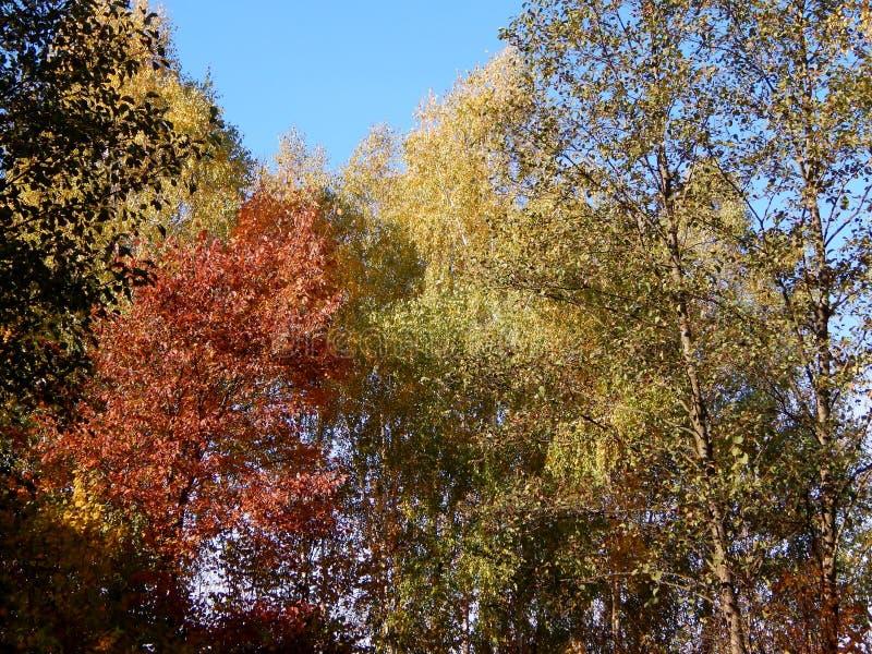 Ensemble van bomen in de herfst royalty-vrije stock fotografie
