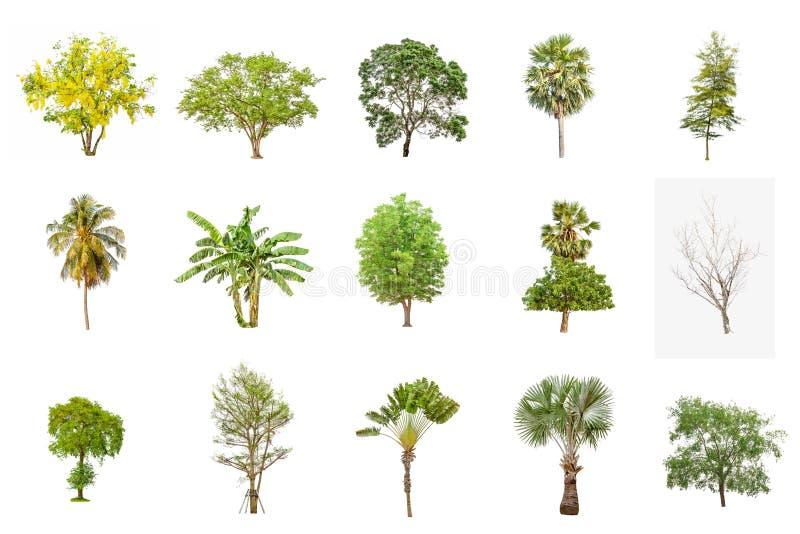 Ensemble vert d'arbre d'isolement sur le blanc en Thaïlande images stock