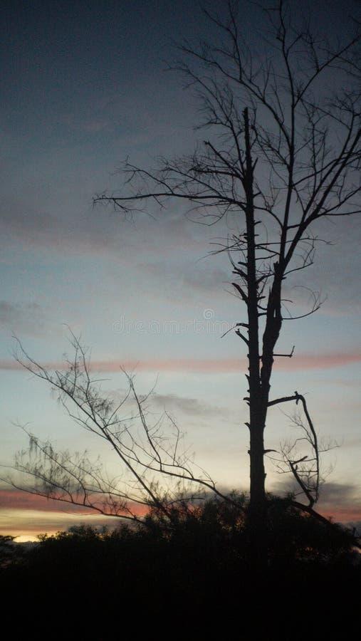 Ensembles de Sun derrière un arbre photo stock
