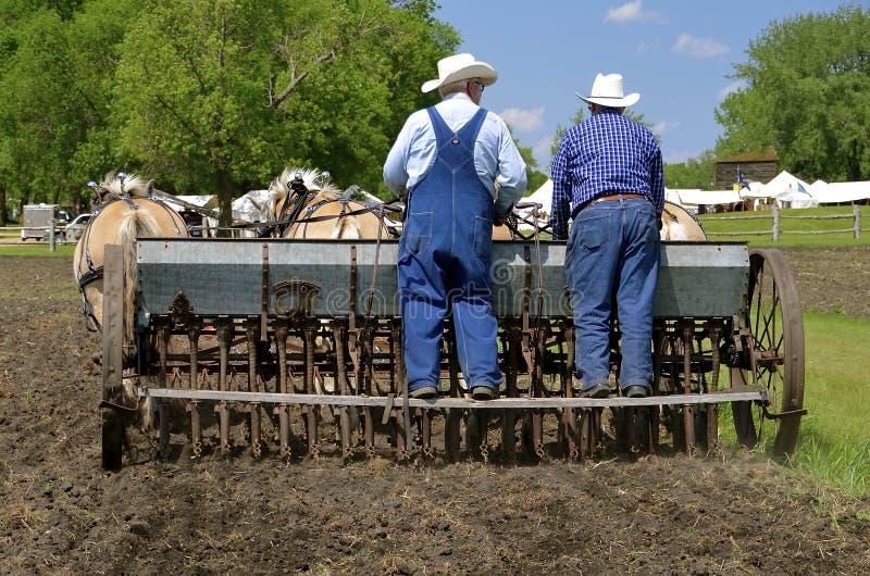 Ensemencement du grain avec une équipe de chevaux photographie stock