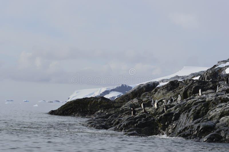 Ensenada de Cierva de los pingüinos de Chinstrap, la Antártida fotos de archivo