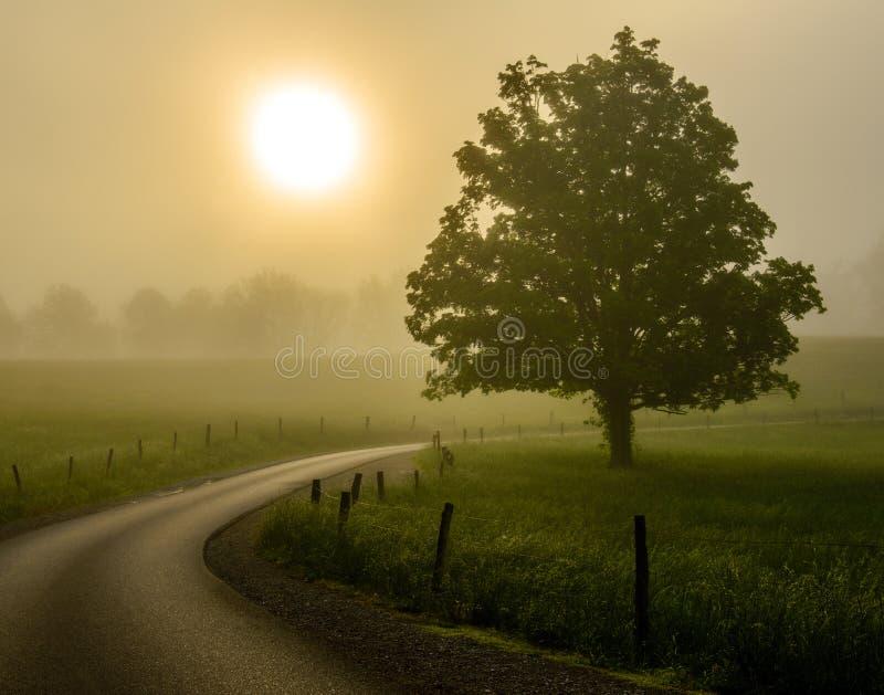Ensenada de niebla de Cades de la salida del sol imagen de archivo