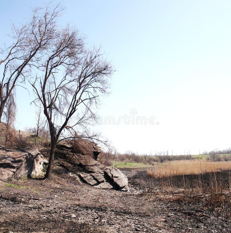 Enslighet på den torra flodbädden royaltyfri foto