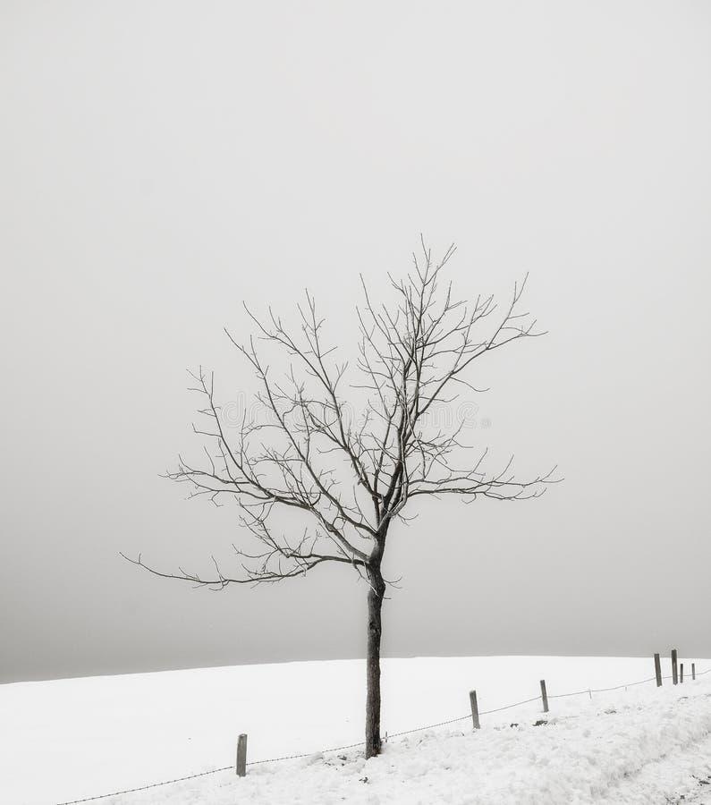 Ensligt träd royaltyfri foto