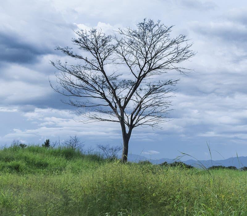 Ensligt träd i ett öppet fält arkivbilder
