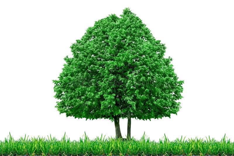 Ensligt träd och gräs som isoleras på en vit bakgrund arkivfoto