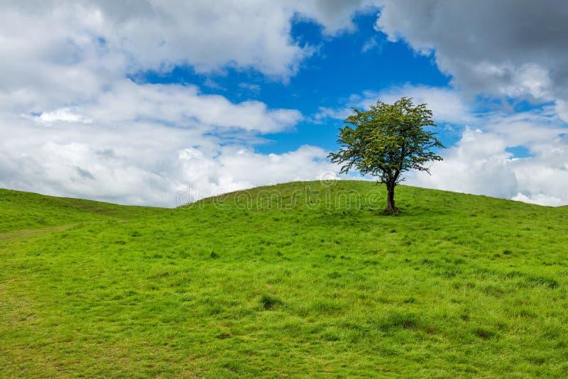 Ensligt träd på en överkant av en grön kulle arkivbilder