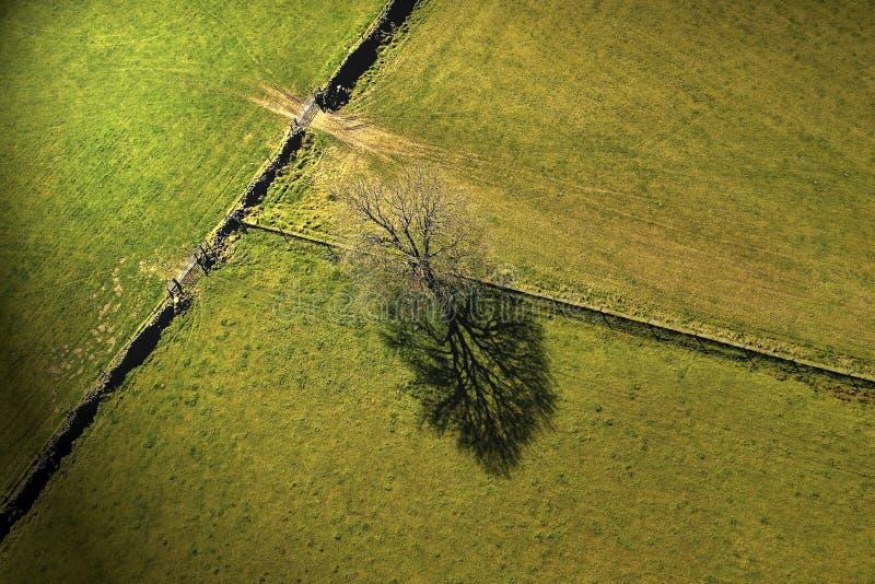 Ensligt träd som står i ett fält royaltyfria bilder