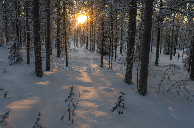 Ensolarado na floresta nevado foto de stock
