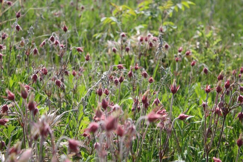 Ensoleillé, herbe de prairie, fleurs, ressort photographie stock libre de droits