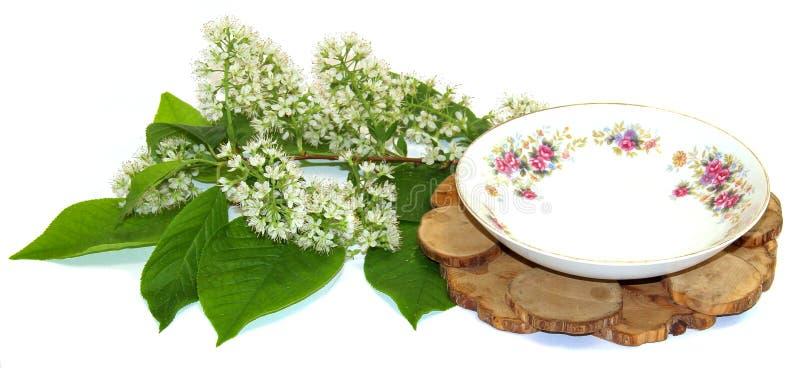 Enställning under en varm, porslinparkopp och tefat som blommar den isolerade filialen av den vita körsbäret royaltyfri foto