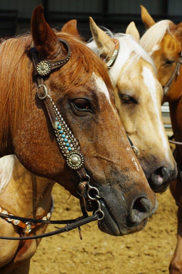 Ensuite dans la ligne à l'exposition de cheval photo libre de droits