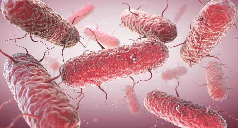 Entérobactères Les entérobactériacées sont une famille nombreuse des bactéries gramnégatives illustration stock