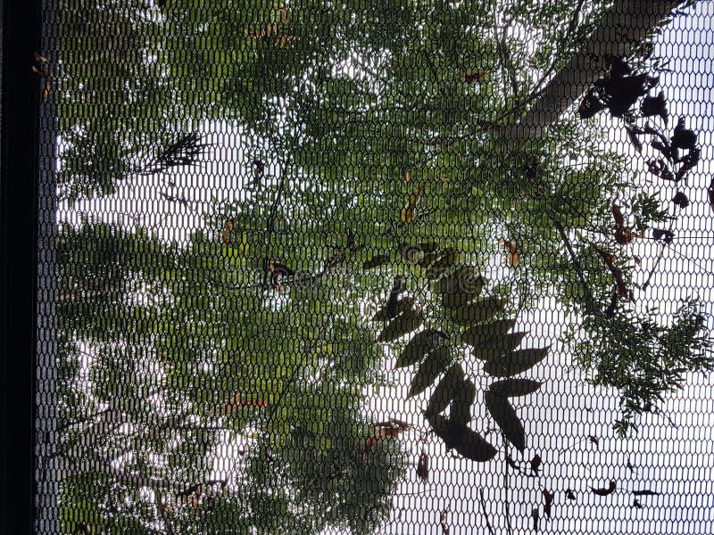 Entaille de behide de nature images stock