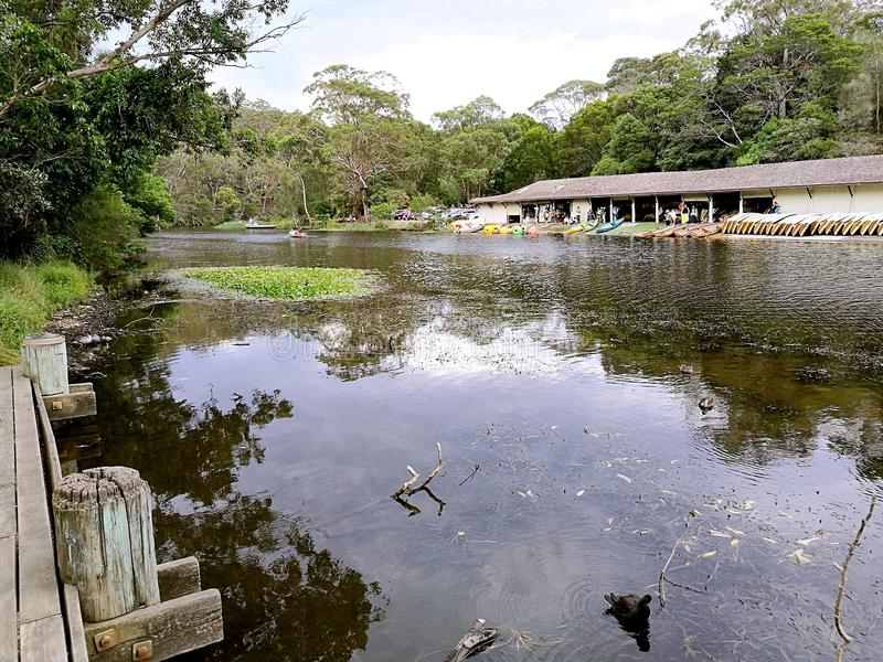 Entailler le parc national royal de rivière @, Sydney image libre de droits