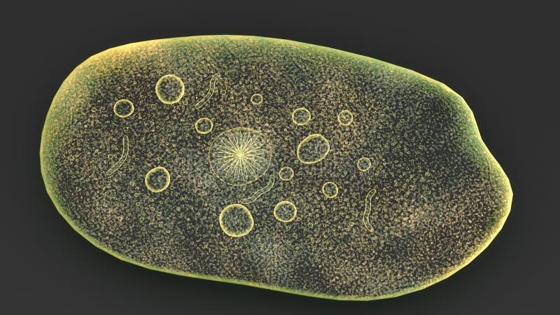 Entamoeba parasite illustration stock