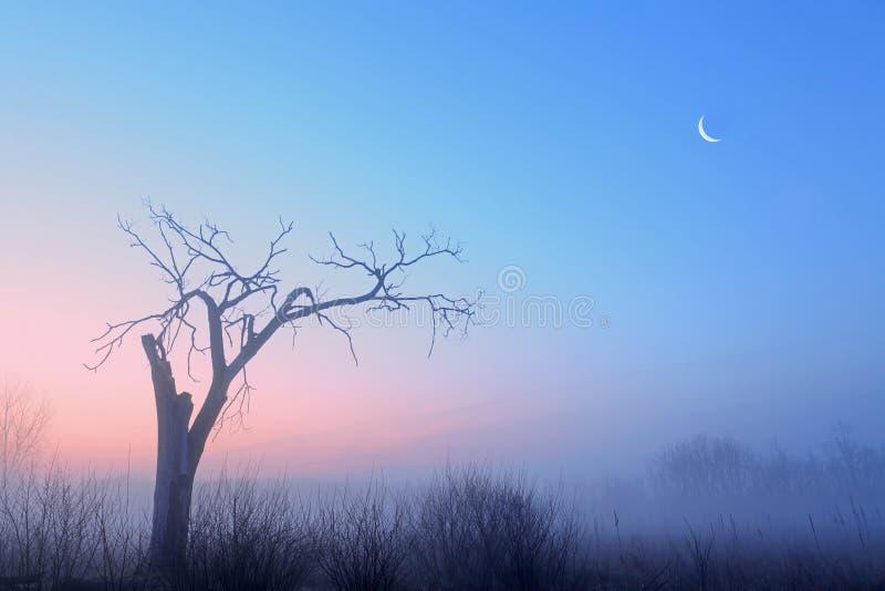 Entblössen Sie Bäume und gerundeten Mond stockbilder