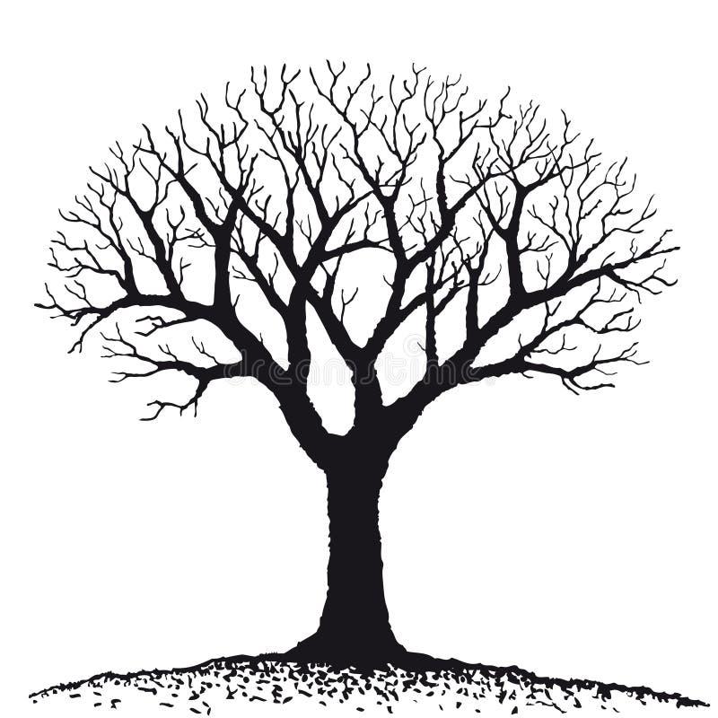 Entblössen Sie Baum (Vektor) lizenzfreie abbildung