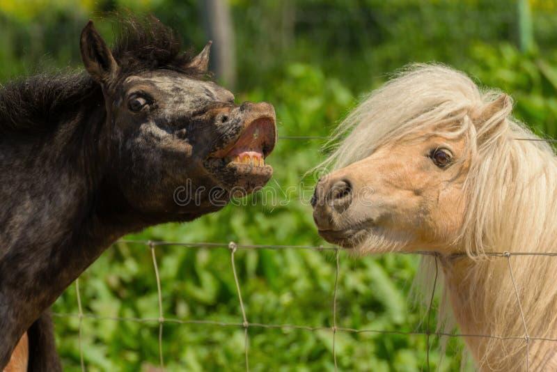 Entdecken Sie geheime Verabredungspferde lizenzfreies stockfoto