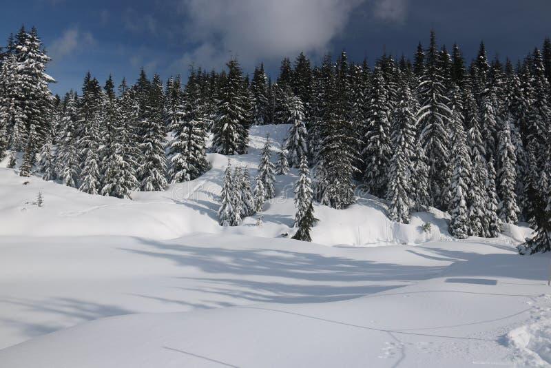 Entdeckungs-kanadischer Winter bewundern Landschaften lizenzfreie stockbilder