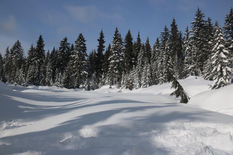 Entdeckungs-kanadischer Winter bewundern Landschaften stockbild