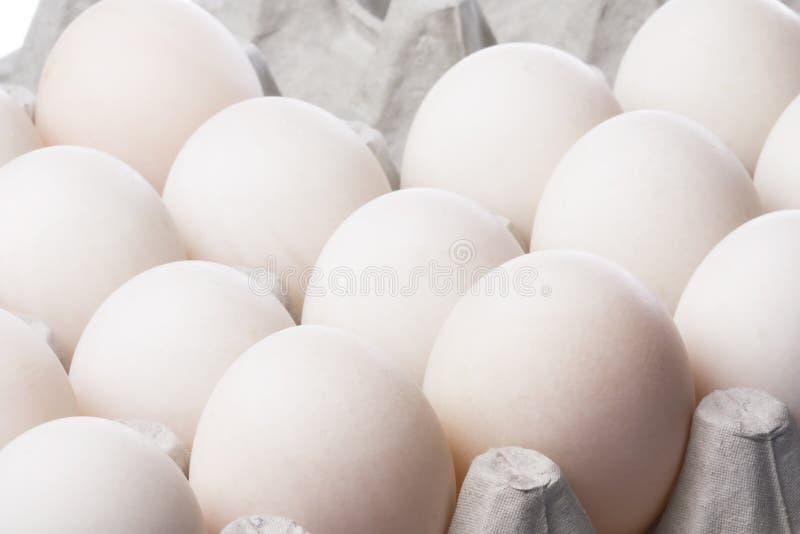 Ente-Eier stockbild