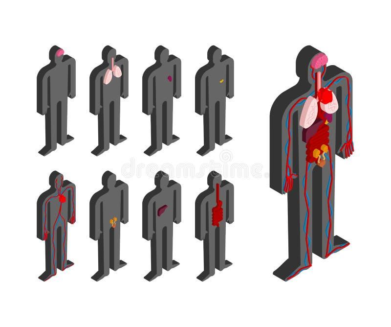 Ente umano di anatomia isometrico Organi interni 3D Sistemi dell'organo royalty illustrazione gratis
