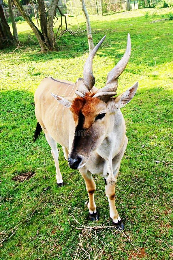 Entebbe zoo wzdłuż jeziora wiktorii w Uganda fotografia stock