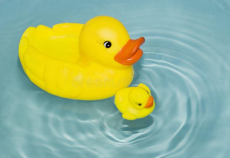 Entefamilie lizenzfreies stockfoto