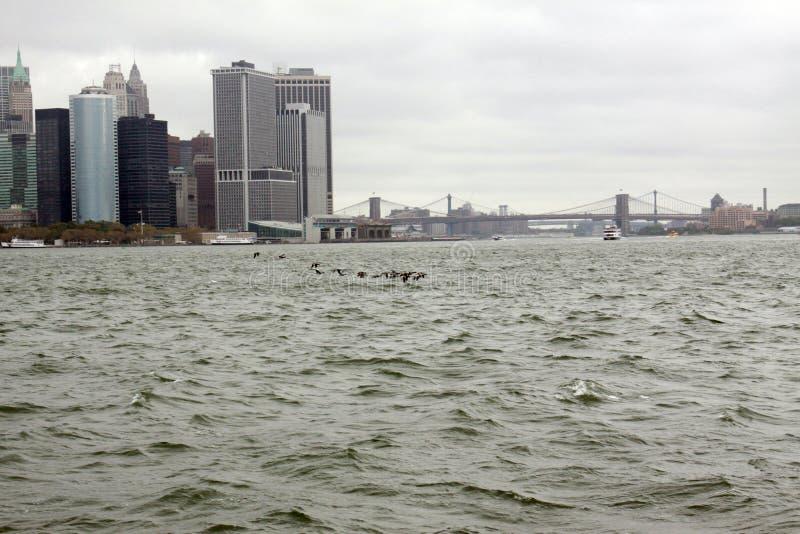 Enten auf dem East River lizenzfreie stockfotos