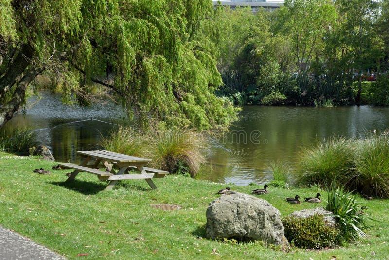 Enten, die neben einem Teich auf dem Gras hocken lizenzfreies stockbild