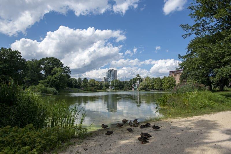 Enten und das Harlem Meer in Central Park NYCS lizenzfreie stockfotos