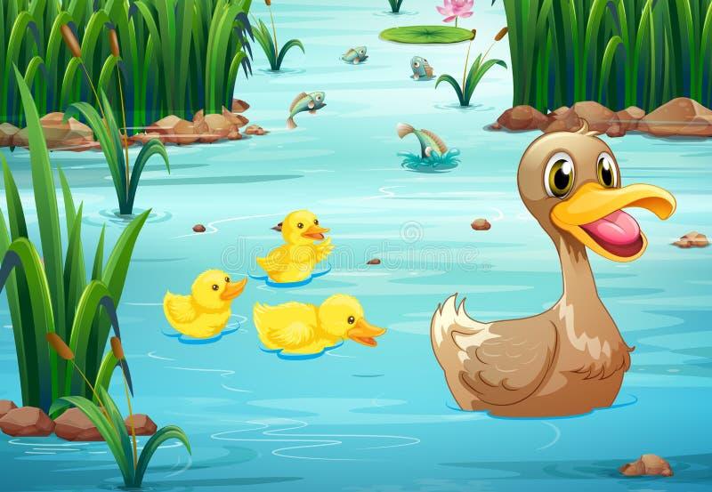 Enten und Teich lizenzfreie abbildung