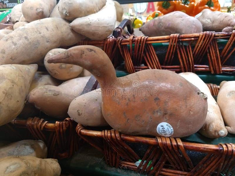 Entengans-Süßkartoffeljamswurzel stockfotos