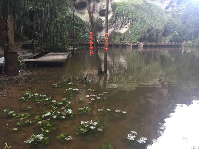Entengrütze im szenischen Teich stockfoto