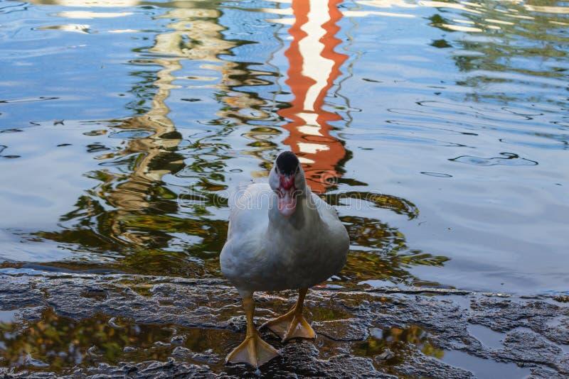 Entenstand nahe bei einem Teich lizenzfreie stockfotografie